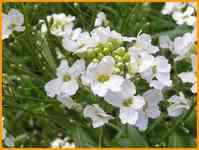 pflanzen bestimmen blumen bl ten flora botanik. Black Bedroom Furniture Sets. Home Design Ideas
